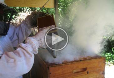 Miniature video tirage miel