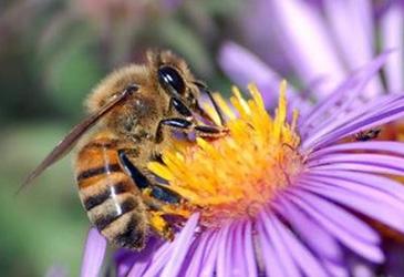 Miniature abeille 1